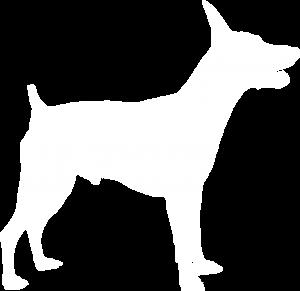 Miniature Pinscher Dog