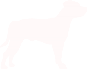Staffordshire Bull Terrier Dog