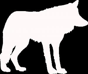 Canis Lupus Dog