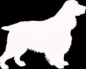 Cavalier Dog
