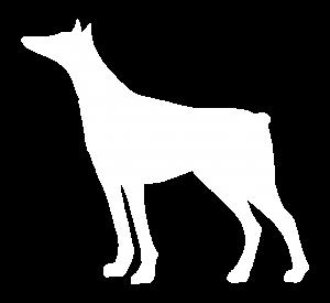 Pinscher Dog