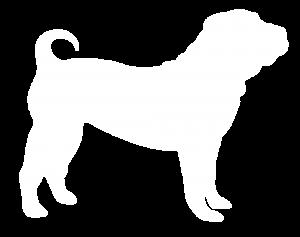 Shar Pei Dog