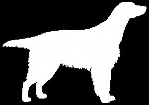 Setter Dog