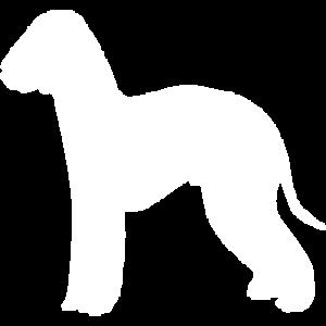 Bedlington Dog