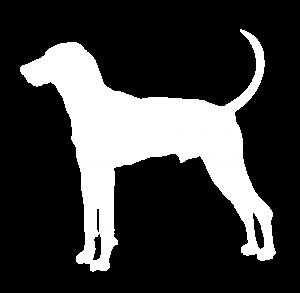 Treeing Walker Coonhound Dog