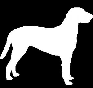 Curly-coated Retriever Dog