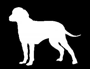 Finnish Hound Dog