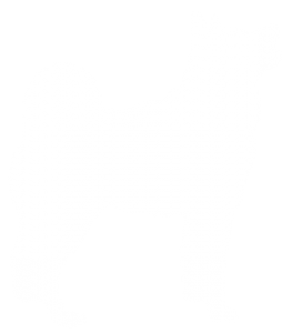 Norwegian Buhund Dog