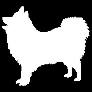 Japanese Spitz Dog