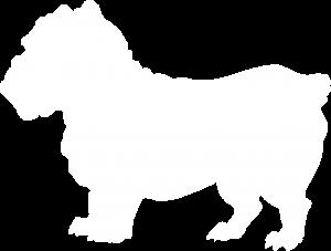 Glen of Imaal Terrier White Dog