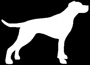 Pointer White Dog